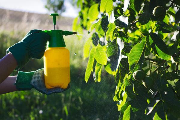 Fungicidas caseros - Fungicidas caseros para árboles frutales