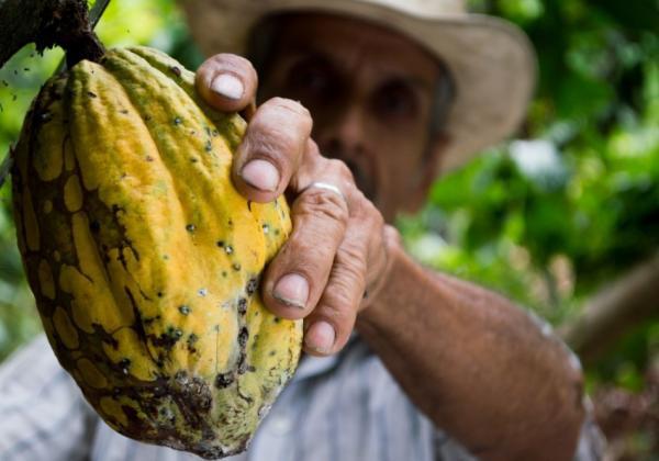 Recursos naturales del Ecuador - Cacao