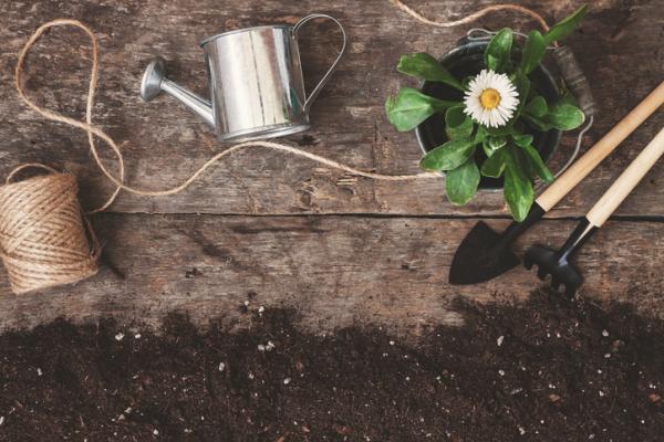 Cómo regar las plantas en vacaciones - Cómo regar las plantas en vacaciones con un cordón