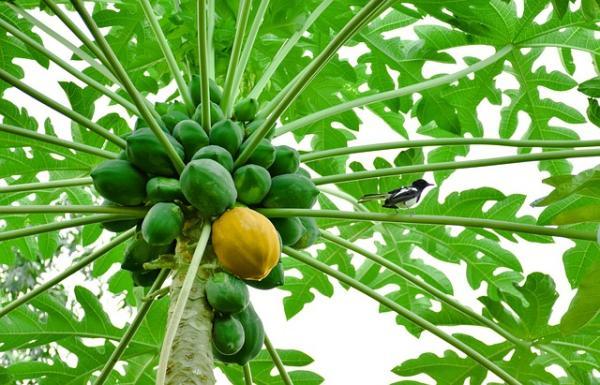 Recursos naturales del Ecuador - Frutas tropicales