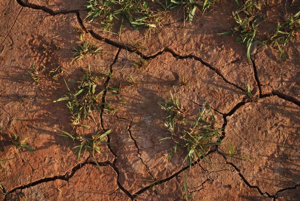 Qué es la erosión del suelo: causas y consecuencias - Consecuencias del deterioro del suelo