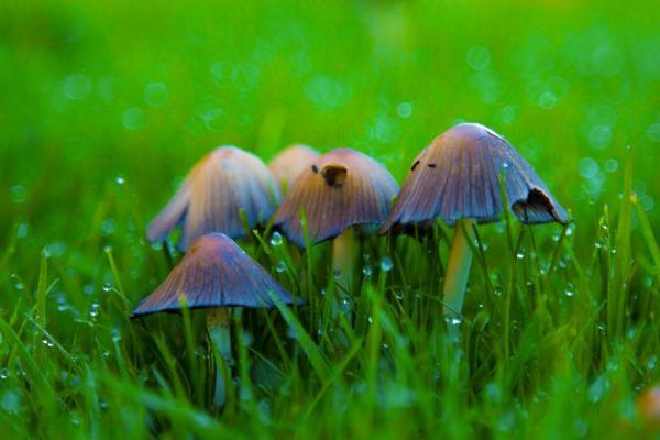 Por qué crecen hongos en mi jardín y cómo eliminarlos