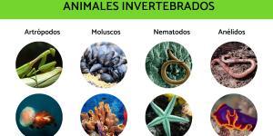 Animales invertebrados: ejemplos y características