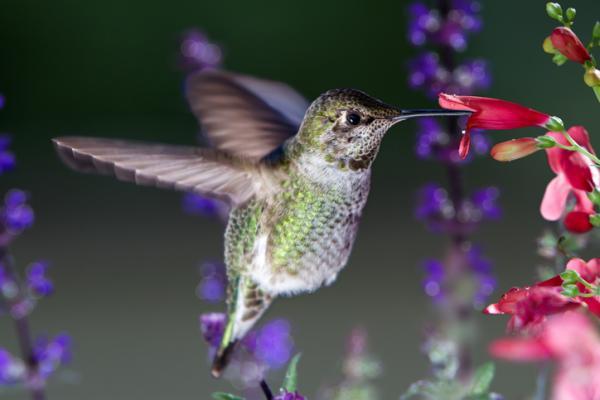 Qué es el néctar y su función - Animales que se alimentan de néctar
