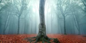 Tipos de árboles de hoja caduca