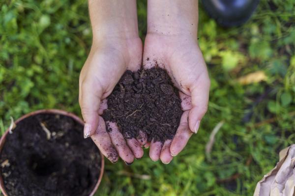 Cuáles son los mejores fertilizantes para plantas