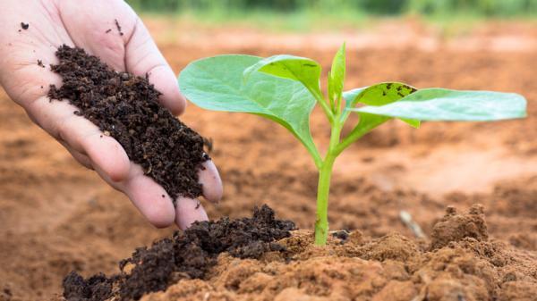 Cuáles son los mejores fertilizantes para plantas - Cuáles son los mejores fertilizantes para plantas - tipos