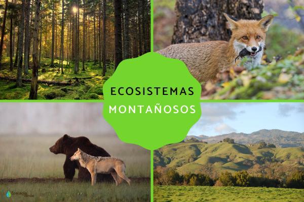 Ecosistema montañoso: características, flora y fauna