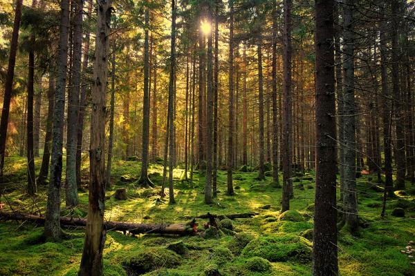 Ecosistema montañoso: características, flora y fauna - Ecosistema montañoso: flora