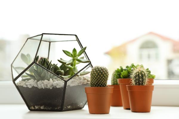 Dónde colocar los cactus según el Feng Shui - Dónde poner los cactus según el Feng Shui