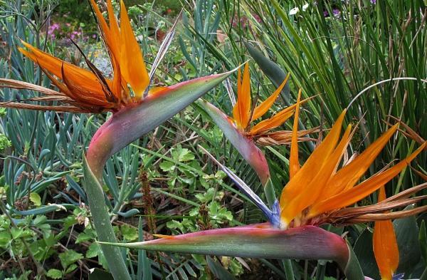 Planta ave del paraíso: cuidados, trasplante y reproducción - Cuidados de la planta ave del paraíso - guía práctica