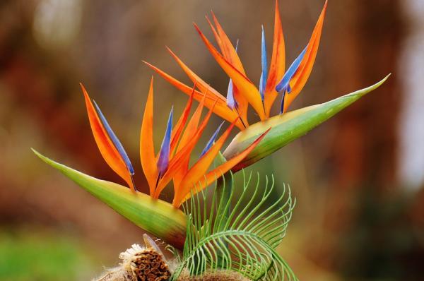 Planta ave del paraíso: cuidados, trasplante y reproducción - Reproducción de la planta ave del paraiso