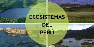 Cuáles son los ecosistemas del Perú
