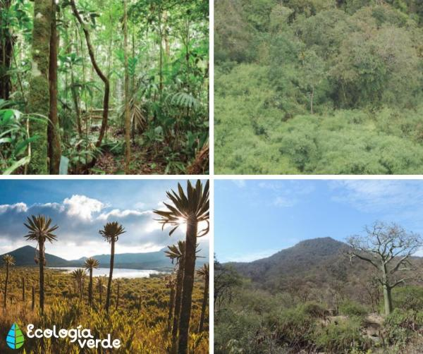Cuáles son los ecosistemas del Perú - Ecosistema terrestres del Perú