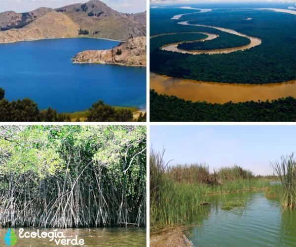 Cuáles son los ecosistemas del Perú - Ecosistemas acuáticos del Perú