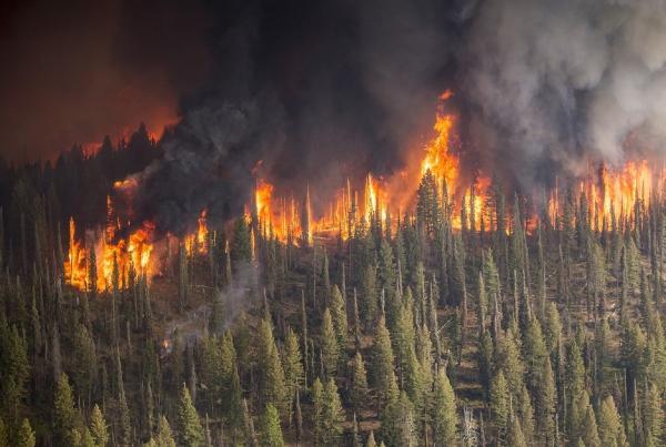 Cómo prevenir los incendios forestales - Incendios forestales: causas