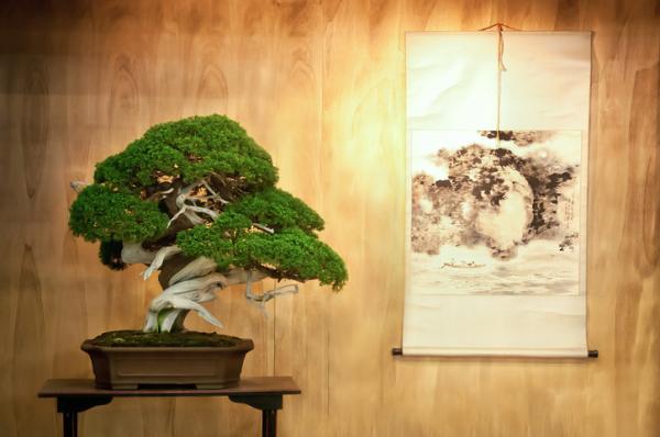 19 tipos de bonsái - Hokidachi