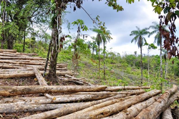 Problemas ambientales en Costa Rica - Deforestación y disminución en la reforestación