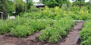 Técnicas de cultivo de agricultura ecológica
