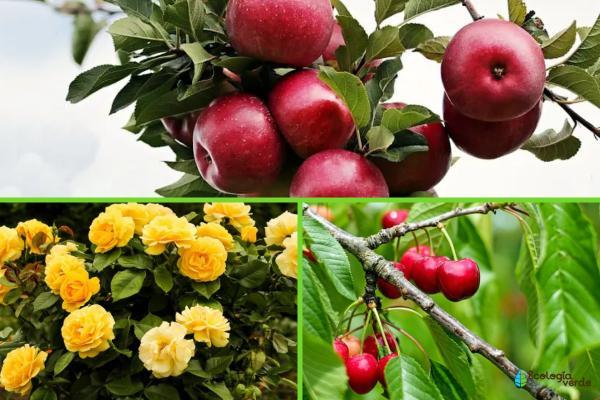Rosaceae: características y ejemplos - Ejemplos de la familia Rosaceae