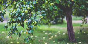Fungicidas caseros para árboles frutales