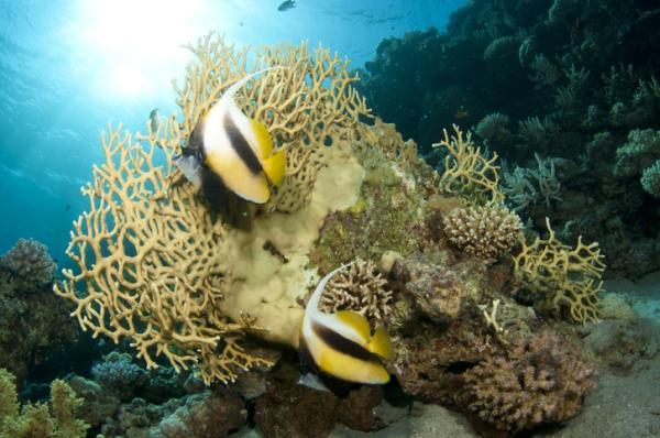 Acidificación de los océanos: qué es, causas y consecuencias