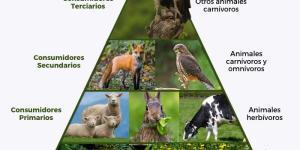 Qué son las pirámides ecológicas y sus tipos