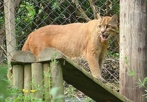 La explotación animal - Acuarios y zoos