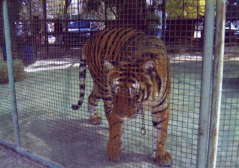 La explotación animal - Circos