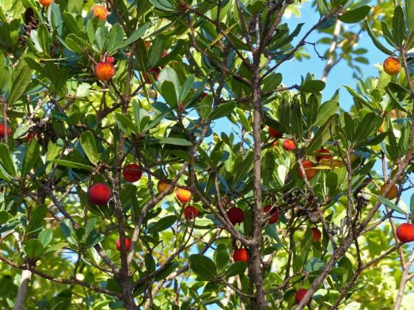 Plantas forestales: qué son, tipos y nombres - Ejemplos de plantas forestales