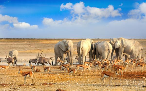Reino Animalia: qué es, características, clasificación y ejemplos - Qué es el reino Animalia