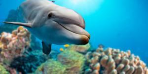 Características de los delfines