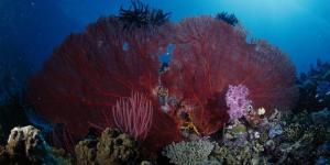 Algas, tipos de plantas marinas de agua