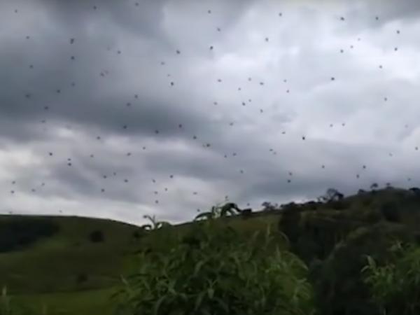 Qué es una lluvia de arañas y por qué pasa - Qué es una lluvia de arañas - la explicación científica