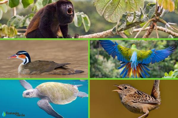 Flora y fauna de Costa Rica - Animales en peligro de extinción en Costa Rica