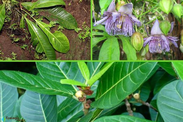 Flora y fauna de Costa Rica - Flora de Costa Rica