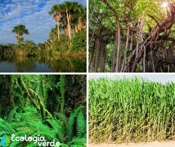 Selva baja: fauna y flora - Selva baja: flora