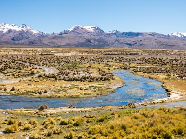 Regiones naturales del Perú - Región de Puna