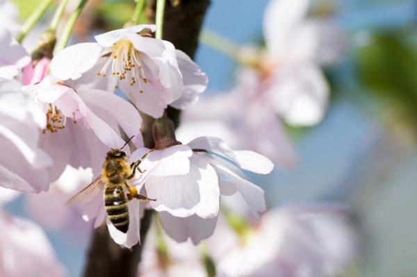 Por qué son importantes las flores en la naturaleza - La importancia de las flores en la naturaleza