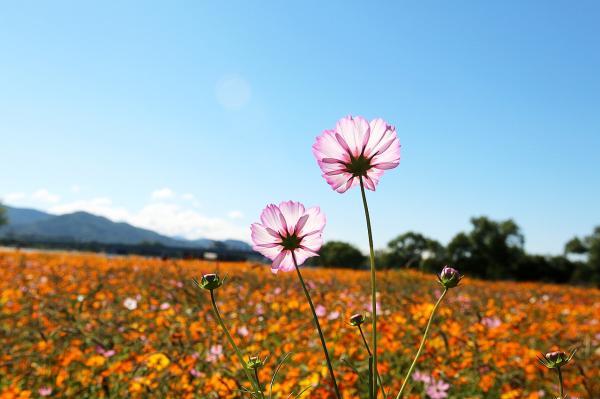 Por qué son importantes las flores en la naturaleza