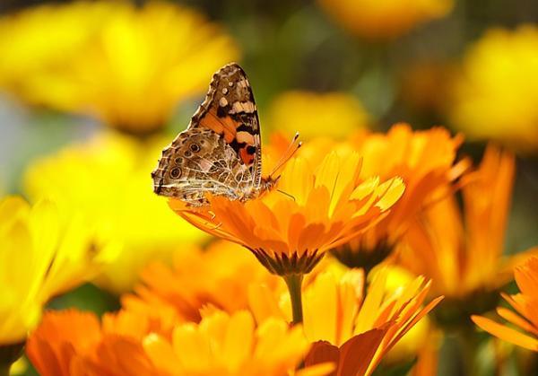 Por qué son importantes las flores en la naturaleza - Qué son las flores y sus características