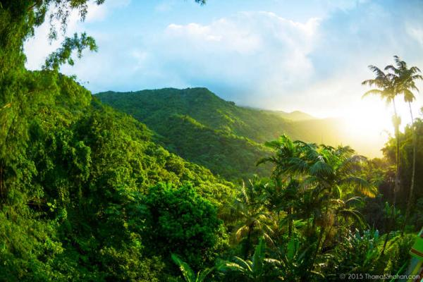 Bosques tropicales: características, flora y fauna