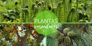 Plantas vasculares: qué son, características y ejemplos