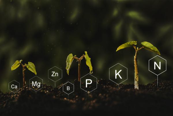 Cómo crecen las plantas - Qué necesitan las plantas para crecer