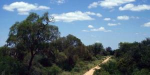 Bosque chaqueño: características, flora y fauna