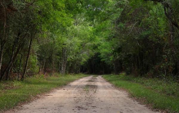 Bosque chaqueño: características, flora y fauna - Características del bosque chaqueño