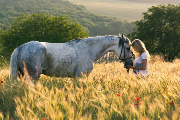 Los 10 animales más inteligentes del mundo - El caballo