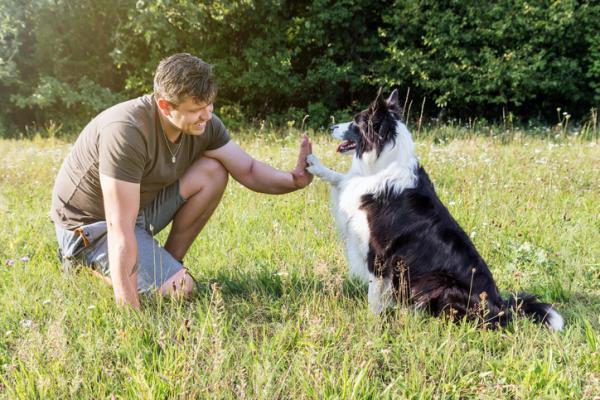 Los 10 animales más inteligentes del mundo - Los perros