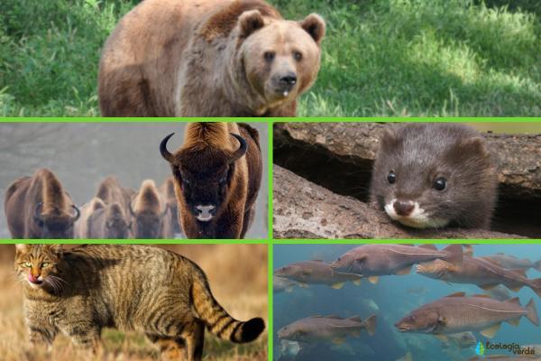 Flora y fauna de Europa - Fauna de Europa