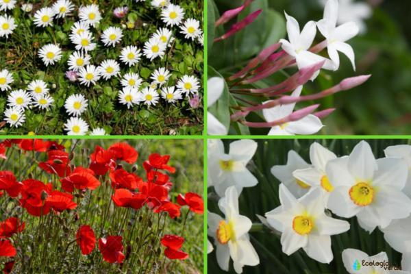 Flora y fauna de Europa - Flora de Europa